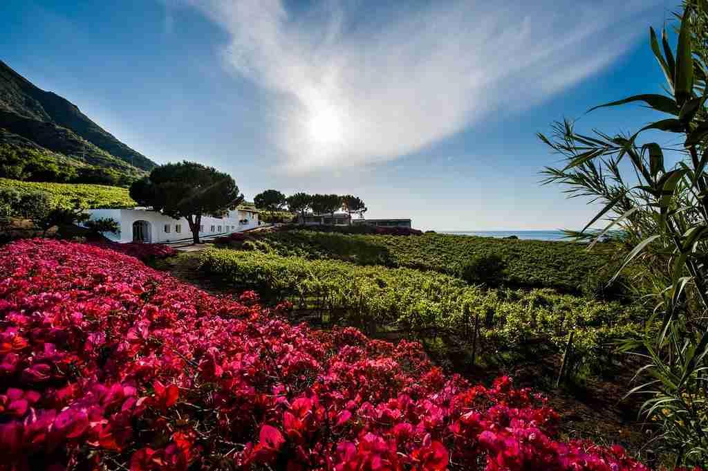Capofaro Locanda Malvasia Wine