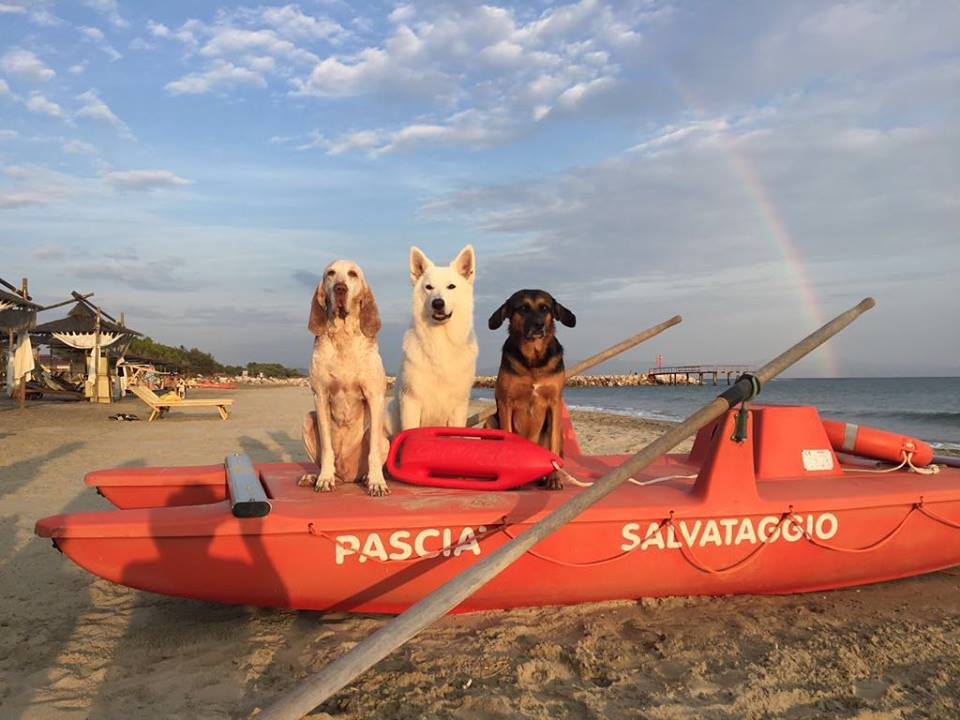Pascià Glam Beach Dog Friendly